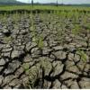 Ratusan Hektar Sawah Terancam Kekeringan di Langkat