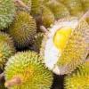 Durian, Salah Satu Kuliner Khas Medan