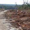 Nasib Lingkungan Hidup Sumatera Utara Kian Memprihatinkan